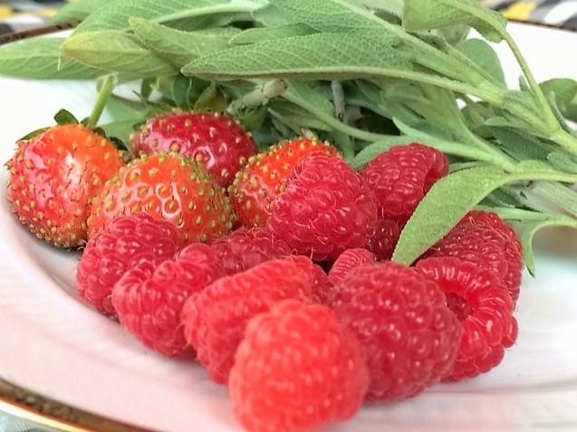 Himbeeren Erdbeeren Salbei Hausfrauenmethode