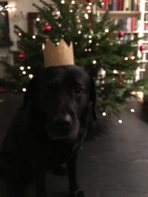 Milla mit Krone vor dem Weihnachtsbaum